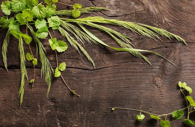 Plantes sauvages sur vieux fond en bois foncé