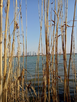 Plantes sèches avec la ville dans la distance