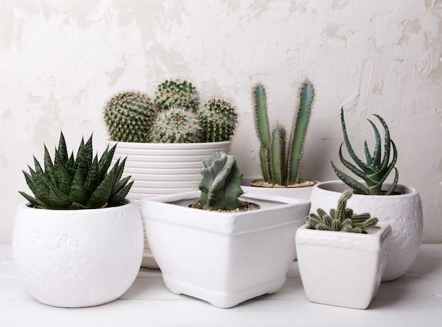 Plantes succulentes et cactus sur table en bois sur mur blanc