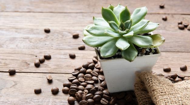 Plantes succulentes en pot blanc vintage et grains de café torréfiés sur fond de bois