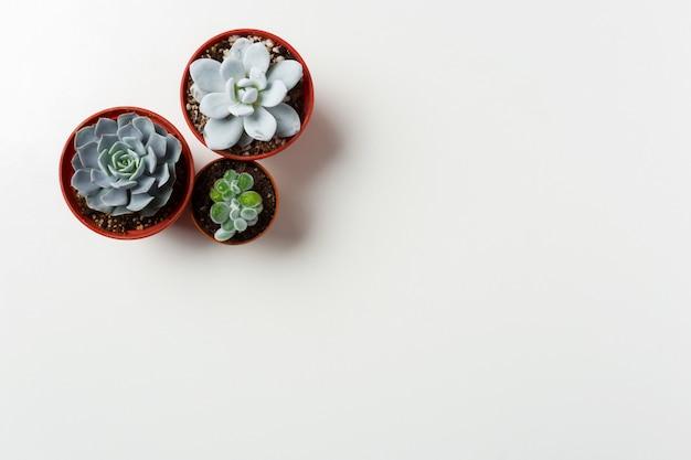 Plantes succulentes en pot sur blanc