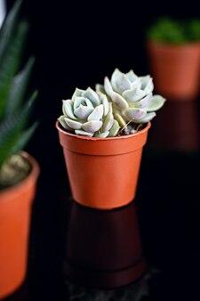 Plantes succulentes en pots de fleurs bruns