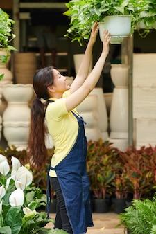 Plantes suspendues d'ouvrier du marché aux fleurs