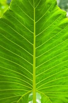 Plantes tropicales feuille verte fond texture vertical