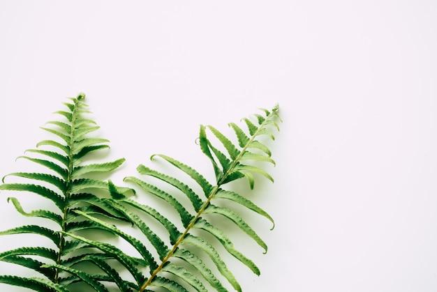 Plantes tropicales sur fond blanc