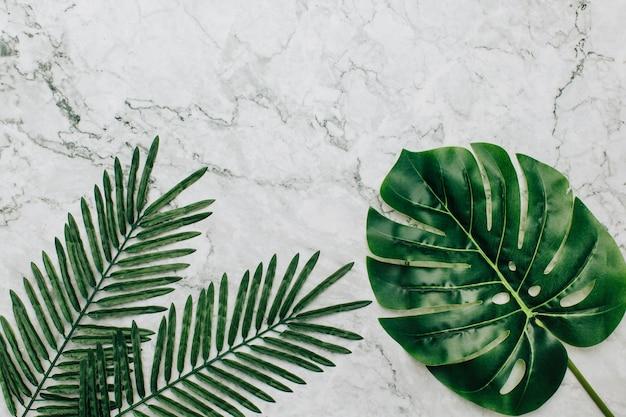 Plantes tropicales sur fond de marbre