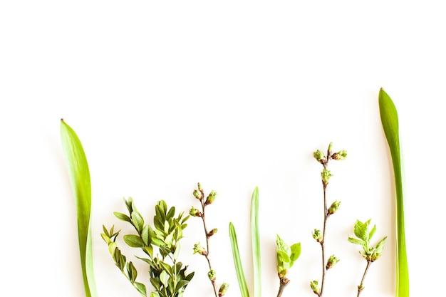 Plantes de verdure de printemps sur fond blanc. concept de forêt et de nature à plat