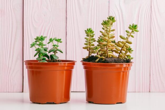 Plantes vertes sur bois rose