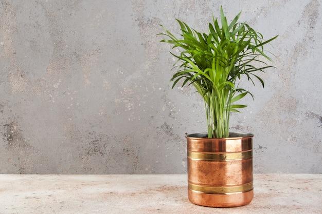 Plantes vertes dans des pots de fleurs en cuivre.