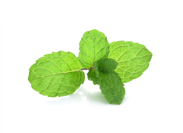 Plantes vertes de feuilles de menthe isolées