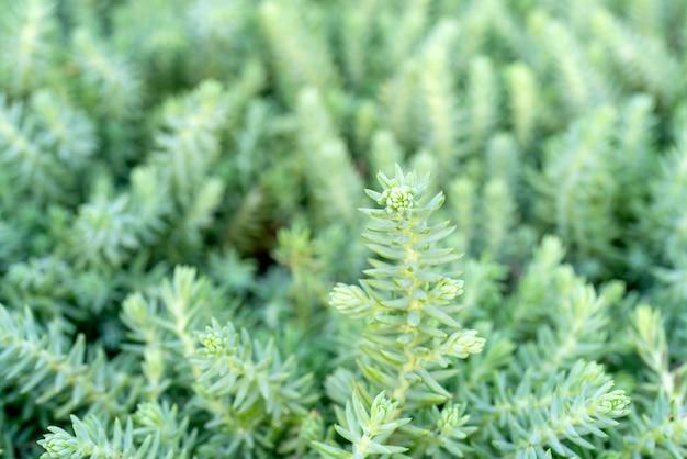 Plantes vertes fond floral