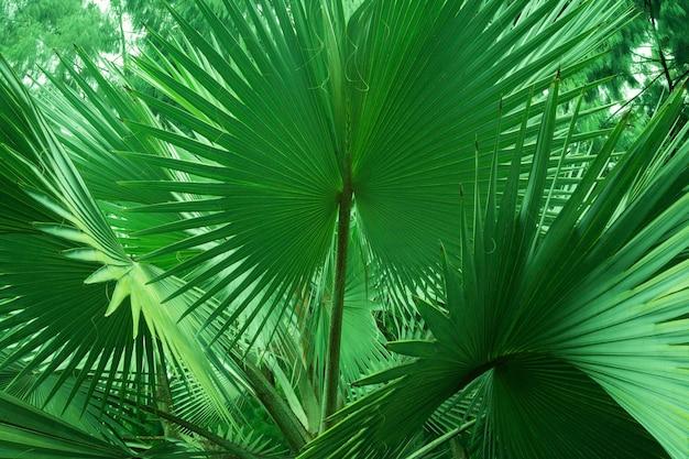 Plantes vertes géantes dans la forêt tropicale