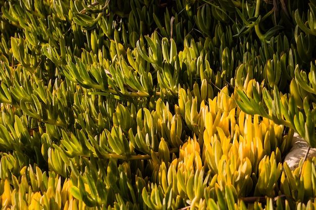 Plantes vertes jaunes comme papier peint.
