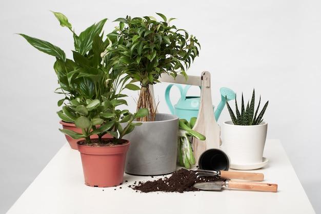 Plantes vertes de la maison, cactus en pots avec pelle et râteau sur fond gris vide