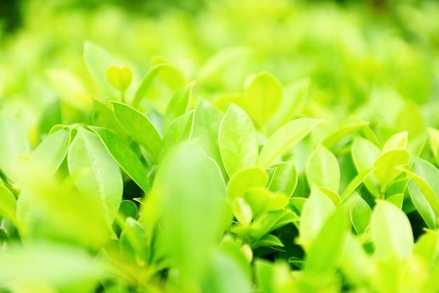 Plantes vertes paysage écologie papier peint frais vue rapprochée de la nature de la feuille verte sur la verdure floue jardin naturel