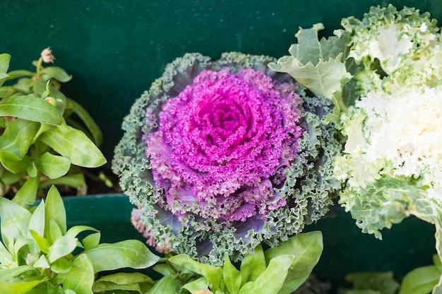 Plantes Vertes En Pot Dans Un Beau Pot En Plein Air. Photo Premium