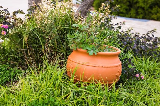 Plantes vertes en pot à l'extérieur. différentes plantes en pot et semis