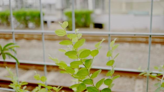 Plantes vertes qui ornent le hall du train
