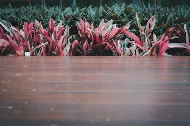 Plantes vertes rouges et plancher en bois