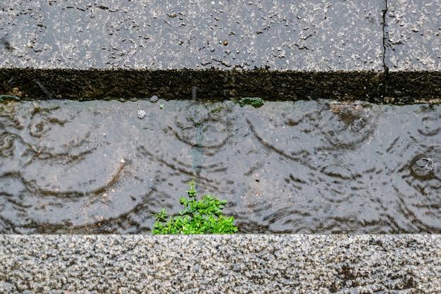 Plantes vertes trempées sous la pluie