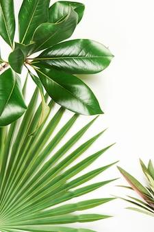 Plantes vertes tropicales exotiques gros plan sur fond blanc