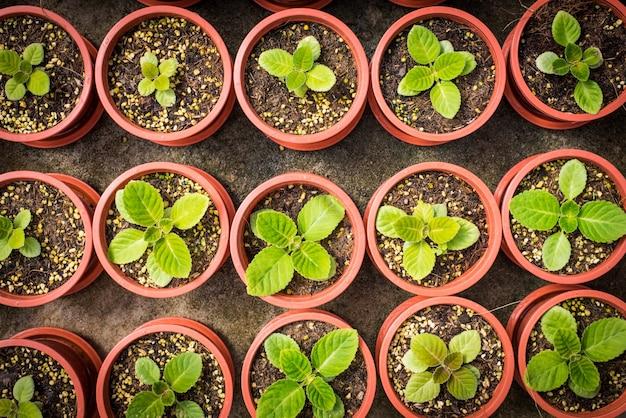 Plants en pot poussant dans de petits pots bruns
