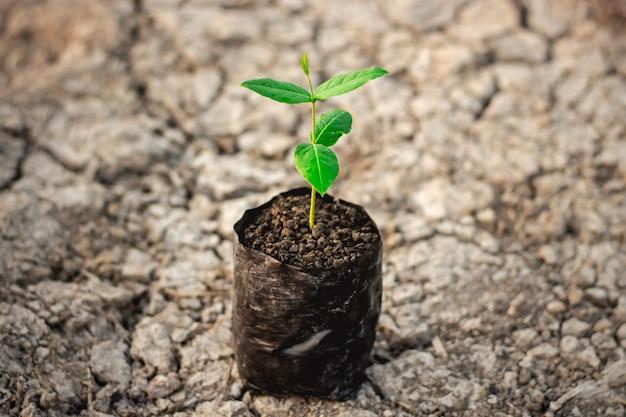Les plants sont cultivés dans le sac de pépinière au sol.