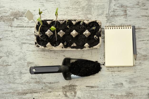 Plantules en pot de plus en plus dans des pots biodégradables sur fond en bois avec espace de copie