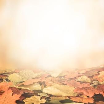 Plat poser de feuilles d'automne dans la surface brillante