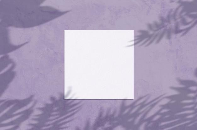Plat poser vue de dessus carte de voeux vierge avec feuille de palmier et branches superposition d'ombre sur grunge violet b