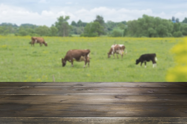 Plateau en bois vide et arrière-plan flou rural de vaches sur champ vert. afficher pour votre produit.