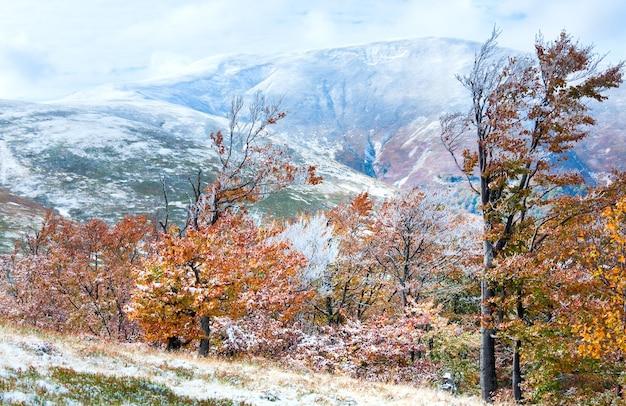 Plateau de borghava de montagne des carpates d'octobre avec la première neige d'hiver et le feuillage coloré d'automne
