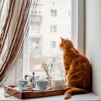 Plateau de petit déjeuner avec un chat