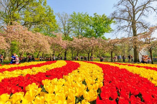 Plates-bandes de fleurs des jardins de keukenhof à lisse, pays-bas