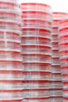 Plats de petry sur table de laboratoire