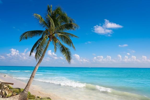 Playa del carmen plage palmiers mexique