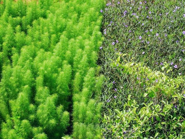Plein cadre de différents types de plantes en fleurs sur le terrain