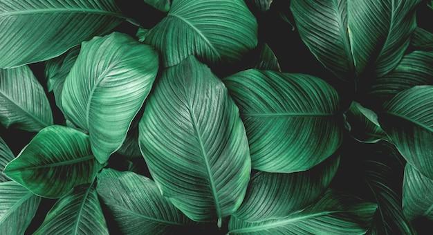 Plein cadre de feuilles vertes motif de fond nature feuillage luxuriant feuille texture