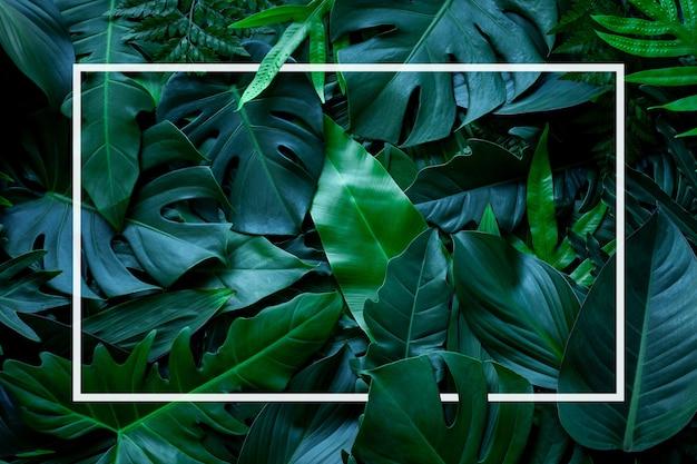 Plein cadre de fond de texture de feuilles tropicales avec cadre blanc