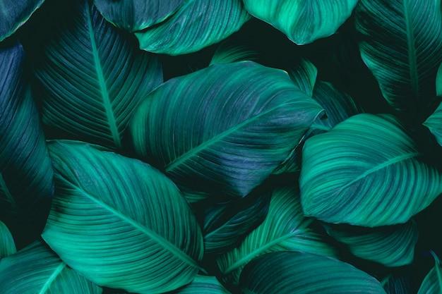 Plein cadre de fond de texture de feuilles vertes