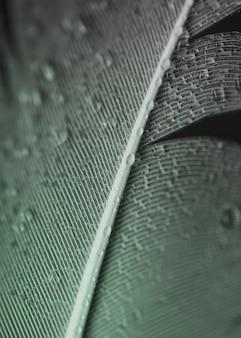 Plein cadre de gouttelettes d'eau sur la surface de la plume grise