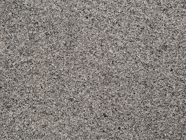 Plein cadre de lichen poussant sur un rocher