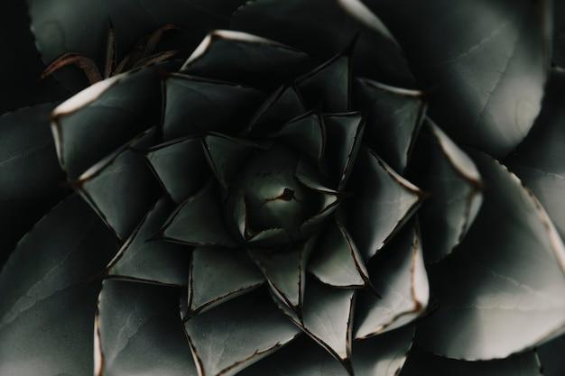 Plein cadre d'une plante succulente abstraite