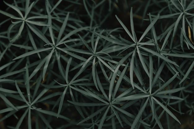 Plein cadre des plantes