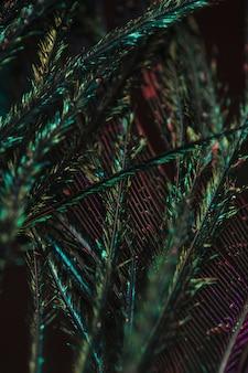 Plein cadre de plumage de paon