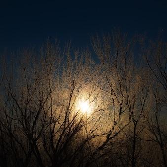 La pleine lune brille à travers les branches de givre par une nuit d'hiver.