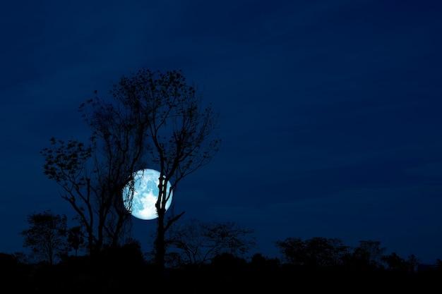Pleine lune de corbeau et arbre de silhouette dans le champ et le ciel nocturne, éléments de cette image fournis par la nasa