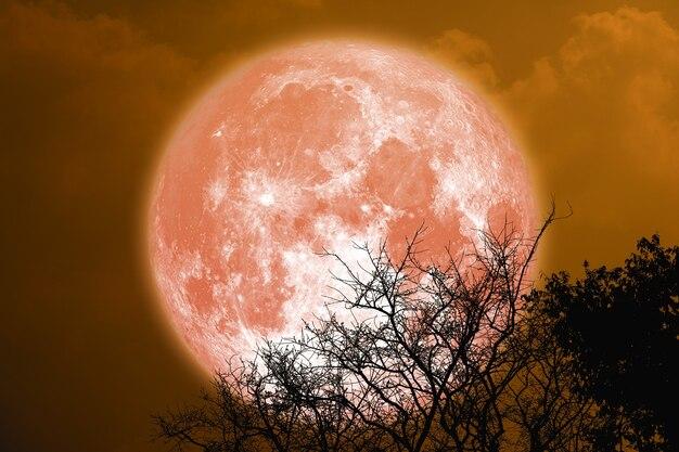 Pleine lune de sang d'esturgeon et arbre de silhouette dans le ciel nocturne, éléments de cette image fournis par la nasa