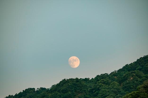 Pleine lune se levant au-dessus de la forêt de conifères ; silhouette d'horizon