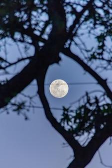 Pleine Lune Avec La Silhouette D'un Arbre Photo Premium